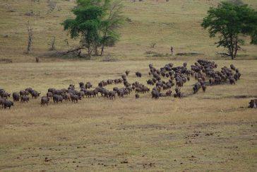 Wyjazd inspekcyjny do Kenii